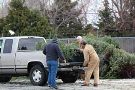 Christmas tree recycling in Yakima