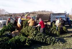 fundraiser - christmas trees