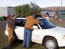 chipping christmas trees to raise money